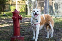 We are pet friendly and even have a brand new 'Bark Park' for your four legged friend!